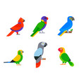 parrots birds breed species animal nature tropical vector image vector image