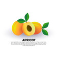 apricot on white background healthy lifestyle or vector image vector image