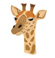 giraffe isolated white background vector image