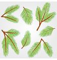 Spruce twigs vector image vector image