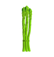 Asparagus vector image vector image