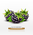 blackberries isolated on white background vector image vector image