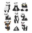 cute panda bears set funny wild animals in vector image vector image