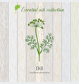 dill essential oil label aromatic plant vector image vector image