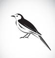 Bird magpie vector image vector image