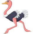 cartoon ostrich running isolated on white backgrou vector image vector image