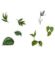 set with flower bud leaves and stem isolated on vector image