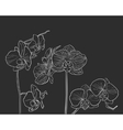 Hand drawn orchid on black vector image