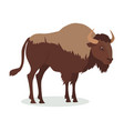 american bison cartoon icon in flat design vector image