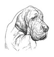 great dane hand drawing portrait vector image vector image