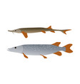 pike and sterlet predatory fish set vector image