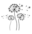 silhouette set collection dandelion and fly petals vector image
