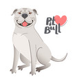 white american staffordshire pit bull terrier vector image