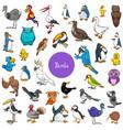 cartoon birds animal characters big set vector image