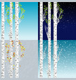 four seasons with birch tree vector image