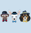 set cartoon hipster dogs vector image