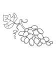 hand drawn sketch fruit - grape eco food vector image