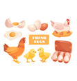 fresh farm eggs concept with packaging and hen vector image