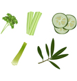 Greens vector image vector image