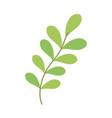 leaves vegetation branch vector image vector image