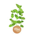 mint herb logotype with round label potted mints vector image vector image
