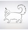 silhouette a graceful maine coon cat vector image vector image