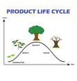 product life cycle on white background vector image