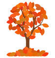 isolated autumn tree with fallen leaves on white vector image