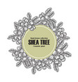 background template with shea tree branch nuts vector image