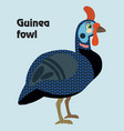 cartoon guinea fowl vector image vector image