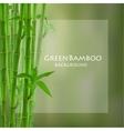 Green bamboo vector image