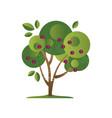 green tree with plums garden plant with ripe vector image vector image