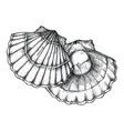 scallop shell hand drawn isolated icon vector image vector image