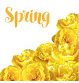 spring background with fluffy yellow tulips vector image vector image