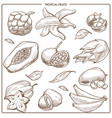 tropical exotic sketch fruits vector image