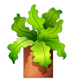 A houseplant in a pot vector image vector image