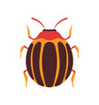 colorado beetle insect bug top view flat vector image vector image
