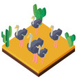 desert scene with ostriches in 3d design vector image vector image