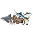 different types of sea animals on white vector image vector image