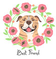happy american staffordshire pit bull terrier vector image