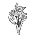 narcissus flower sketch vector image vector image