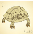Sketch fancy turtle in vintage style vector image vector image