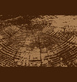 wood texture pattern vector image