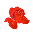 Blossom lonely red flower vector image vector image