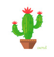 isolated cactus doodle style vector image vector image