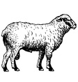 Shropshire sheep vector | Price: 1 Credit (USD $1)