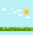 spring green grass and chamomile landscape vector image vector image