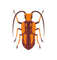 beetle insect orange and brown bug top view flat vector image vector image