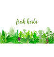 popular realistic herbs and flowers with text set vector image vector image