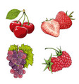 set berries in color isolated on white vector image vector image
